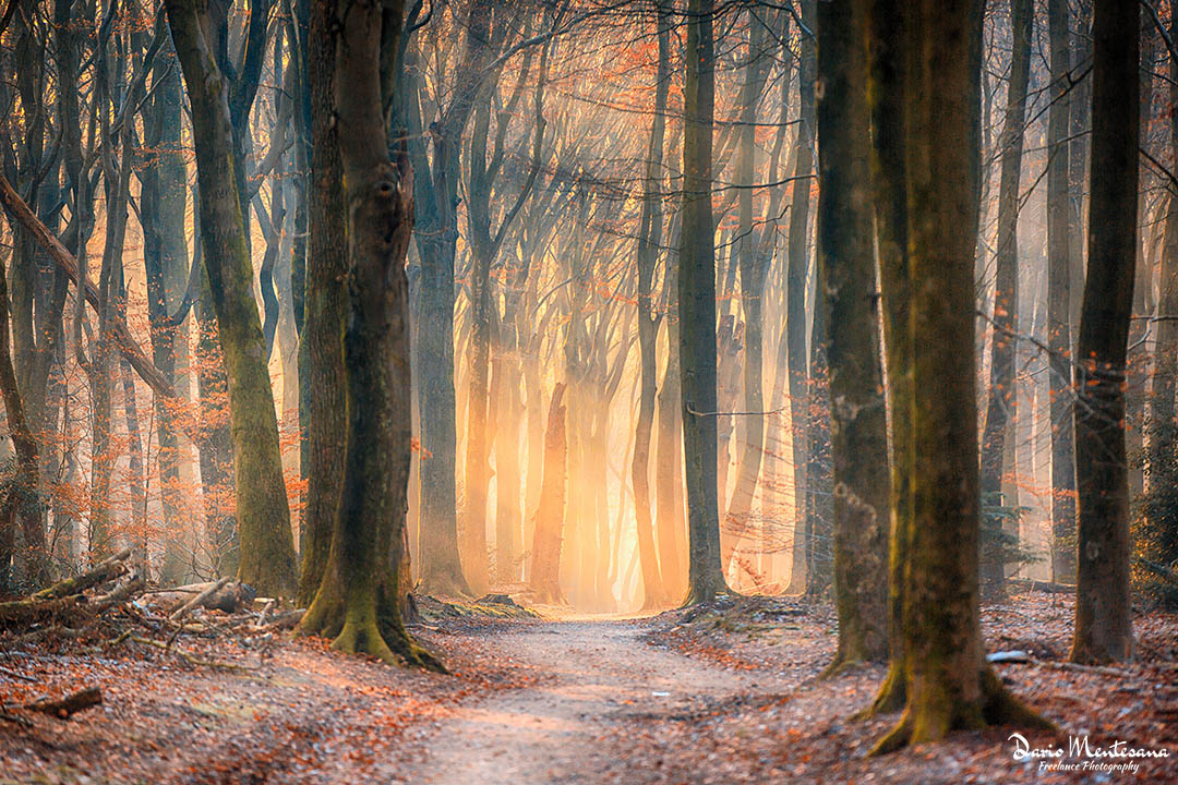 Holland Forest